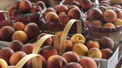 Late freezes impact peach harvest in Green Country