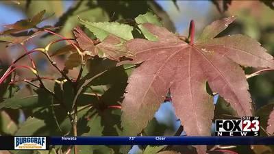 #FOX23Foliage: Tracking Oklahoma's fall foliage