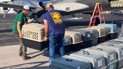 Humane Society of Tulsa helps evacuate animals from Louisiana shelters