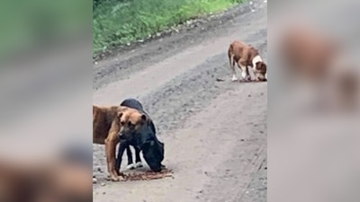 Reward offered for information about cruelty, death of two dogs in Muskogee County