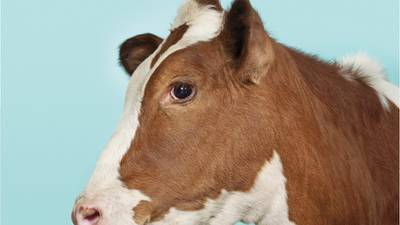 Mayes County community reporting cows getting shot, killed